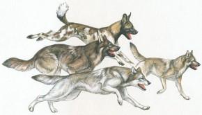 Modern-wild-dogs