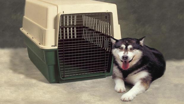 klouvi skylou-dog_crate