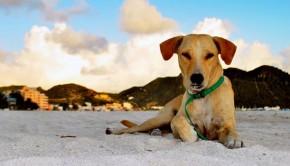 skylos-dog