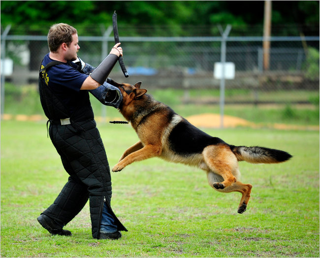 Guard Dog Training Cost